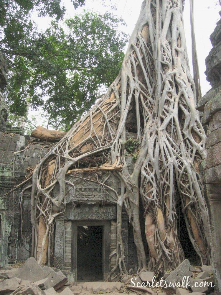 Angkor wat tempel Cambodza