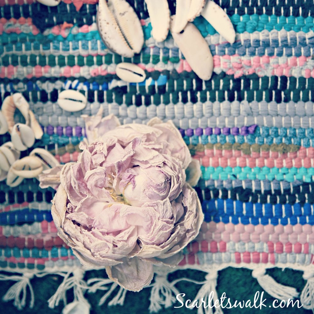 roses and shells kopio