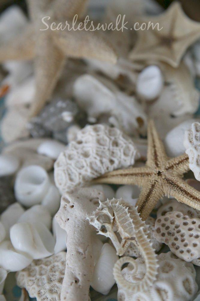 merenneito ja korallit