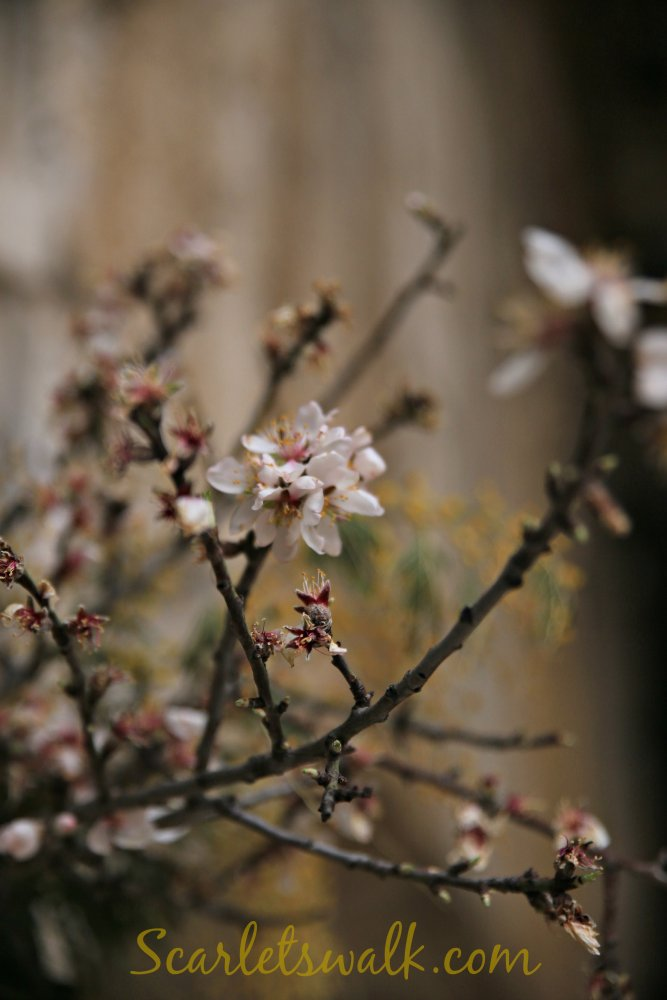 kukkiva puu kroatia