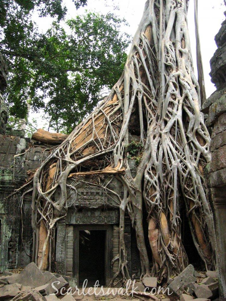 kambodja juuret temppeli