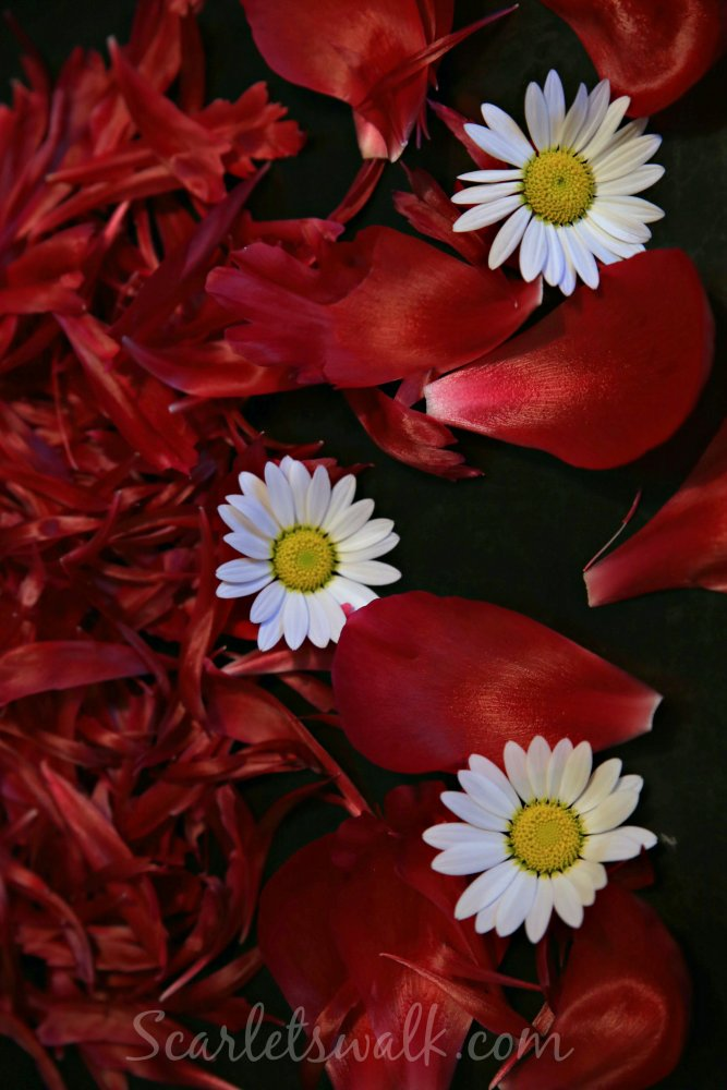 pionit ja daisy
