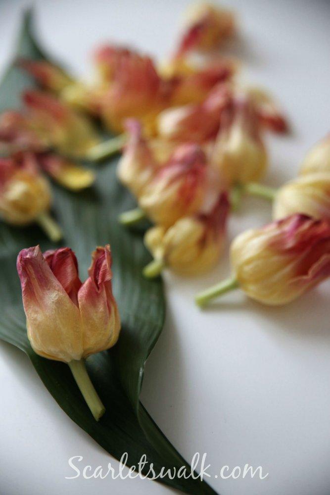 tulppaanit kukat