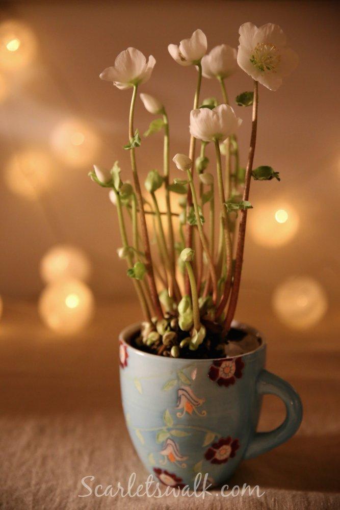 jouluruusu mari havian kukkakauppa