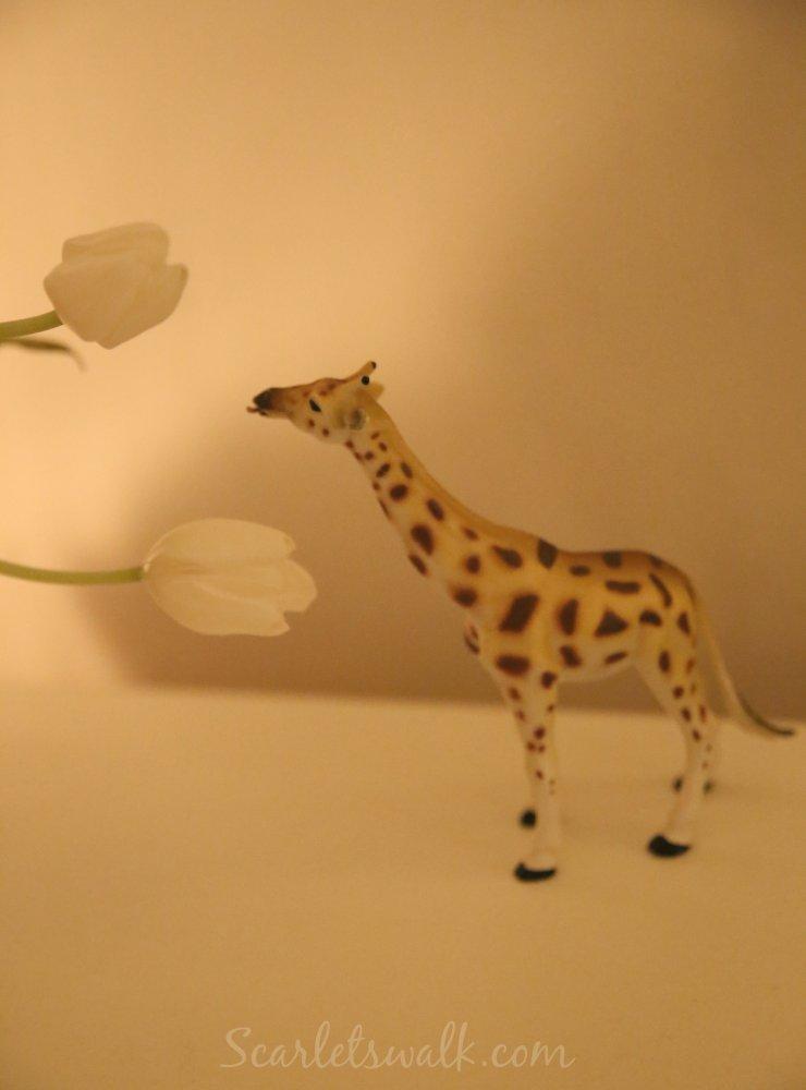 afrikka kirahvi