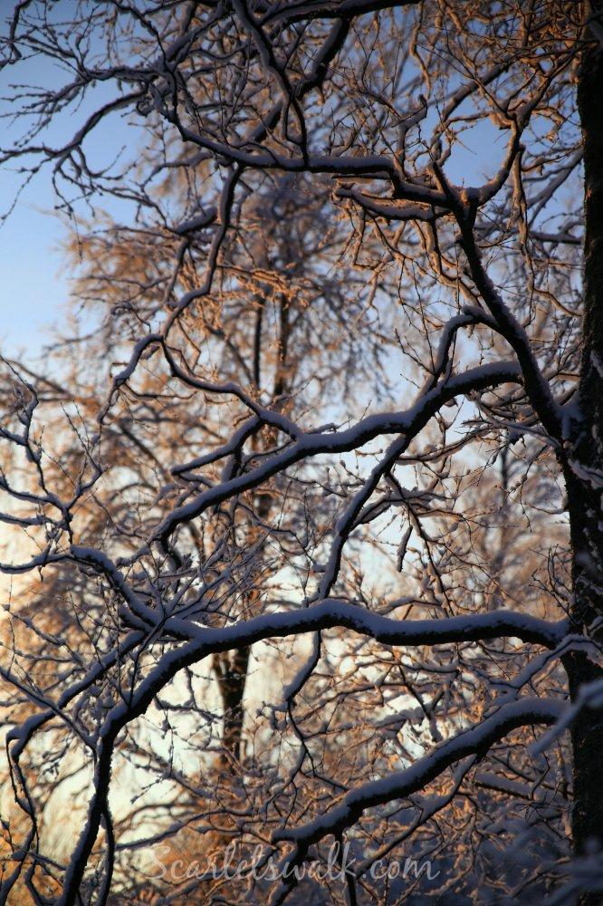 Talvinen tammikuu
