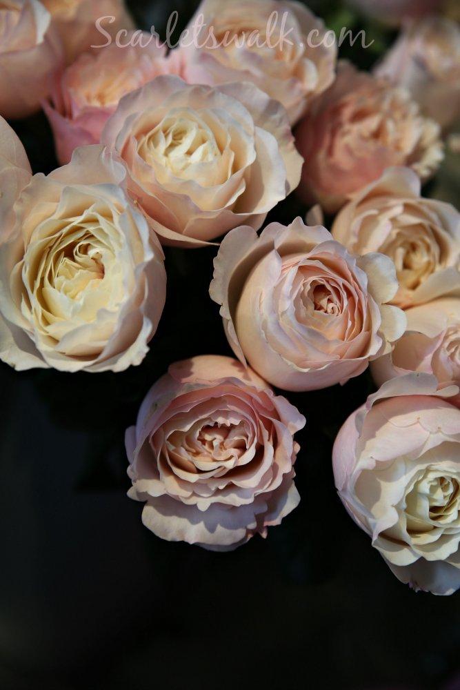 David Austin love roses