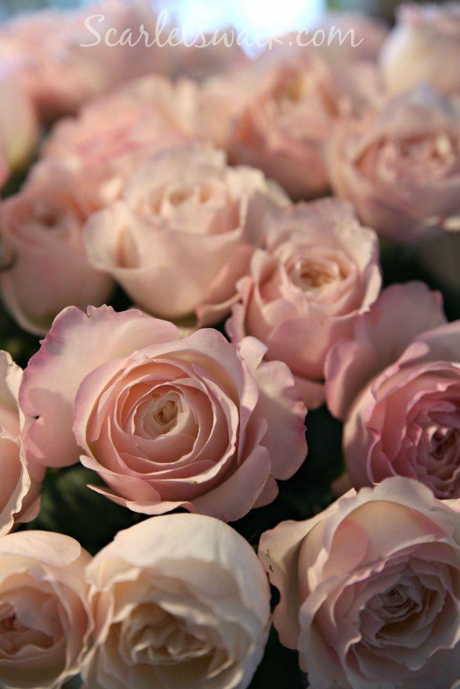 David Austin pink roses