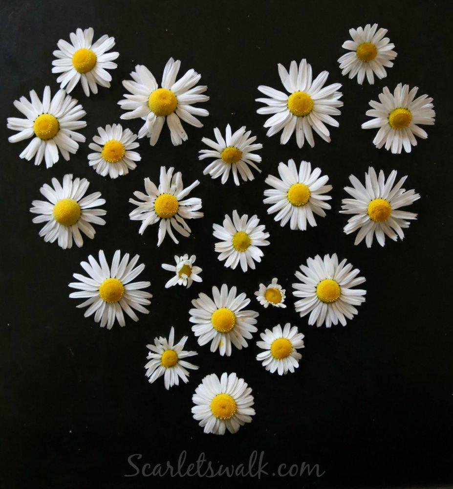 Kiitos kukkia