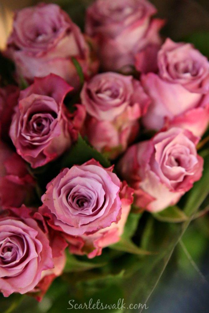 pinkit kauniit ruusut