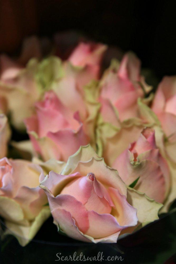 pinkit nuppu ruusut