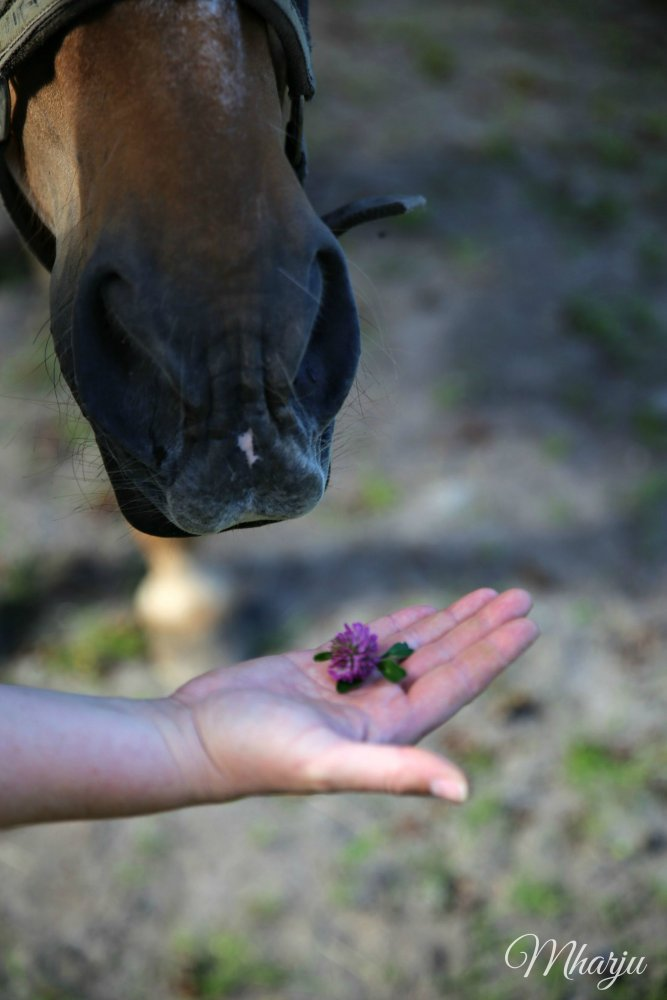 Luomutila hevonen